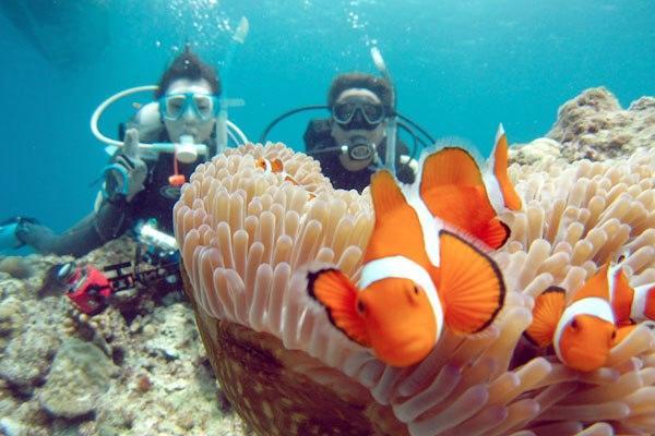 【体験・2ビーチ】時間を気にせず楽しみたい方へ♪沖縄で1日ダイビング!
