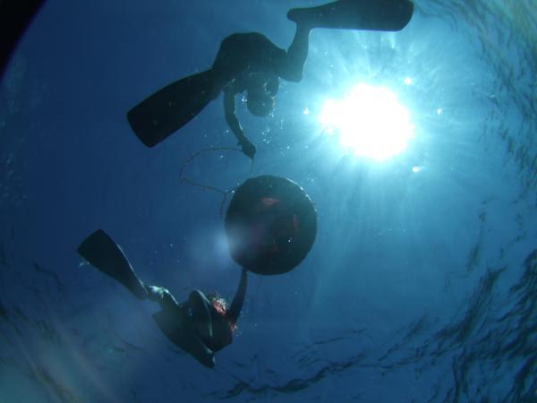 【体験ダイビング】伊豆観光の思い出に、魅力あふれるダイビングを楽しもう!★写真プレゼント