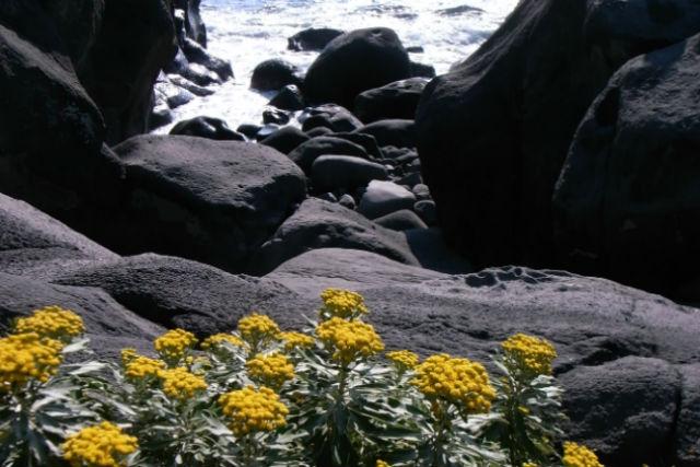【のんびり1日体験】自由に選べるコース☆伊豆城ヶ崎を家族で自然散策★写真プレゼント