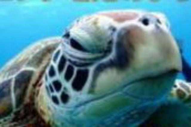 【四国・体験ダイビング】初心者大歓迎!徳島で1泊2日の体験ダイビングツアー★ステッカープレゼント