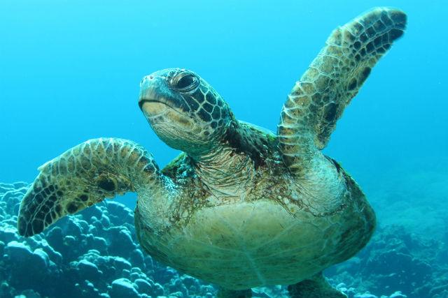 【小笠原・ファンダイビング】母島の澄んだ海に潜ろう!2ボートファンダイビング!★写真プレゼント