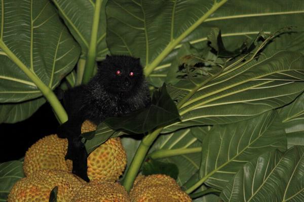 【小笠原・ナイトツアー】希少な生き物たちを観察!夜の小笠原を探検しよう
