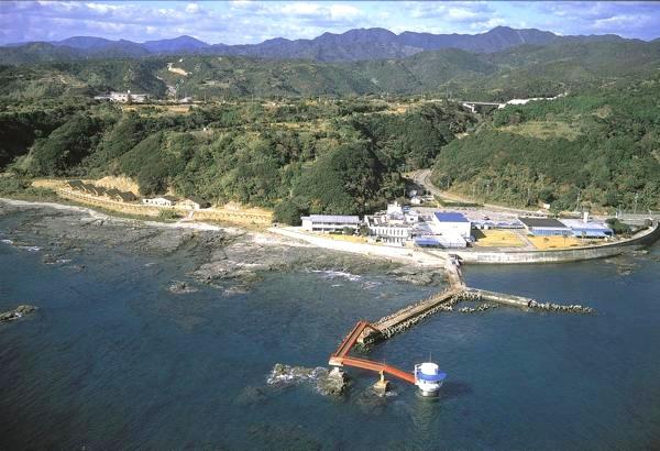 【半日・午前】クジラに会いに行こう!豊かな串本の海をウォッチング