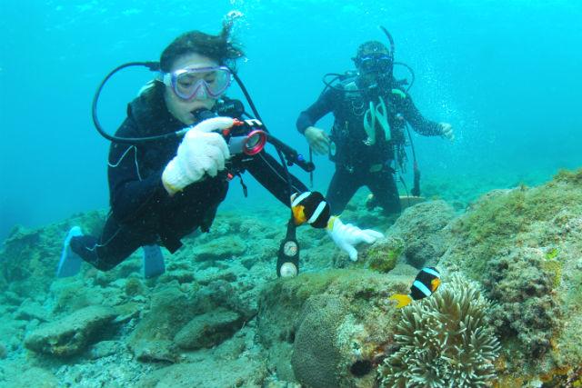 【和歌山・体験ダイビング】サンゴの海に潜ろう!串本・体験ダイビング