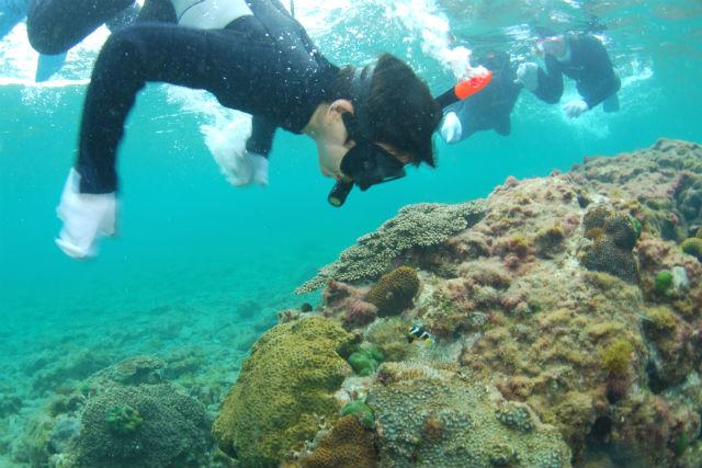 【和歌山・シュノーケリング】本州最大規模のサンゴ礁に感動!ビーチシュノーケリング