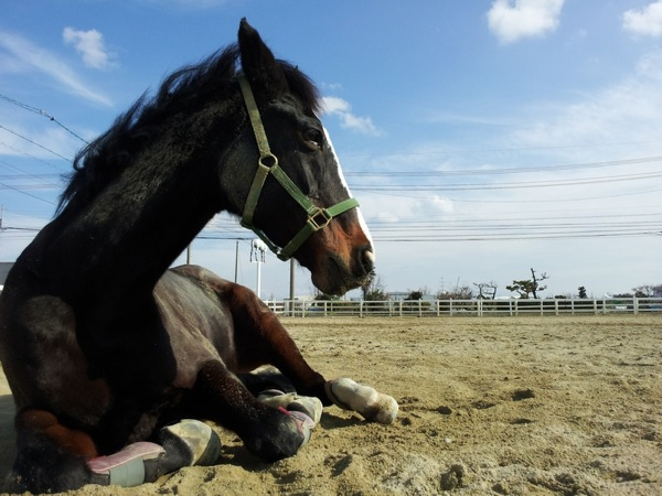 【騎乗時間30分】馬のお手入れや触れ合いも!乗馬倶楽部メンバー体験★写真プレゼント