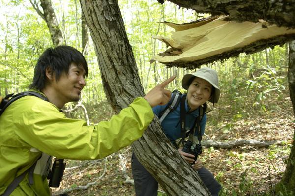 【半日・午前】日本屈指のブナの森を満喫!蔦の森ランブリング