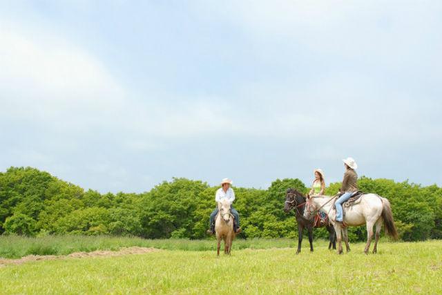 【騎乗時間50分】小学3年生からOK!函館が一望できる草原へ☆丘の上乗馬!