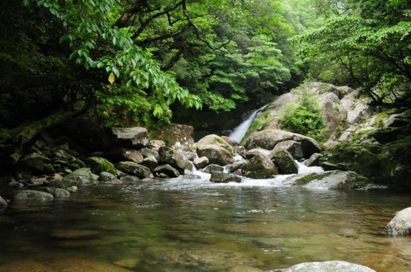 【難易度★★☆☆☆】静かな森でリフレッシュ!屋久杉・天文の森トレッキング