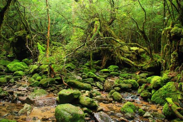 【難易度★★☆☆☆】もののけの森を堪能♪白谷雲水峡・太鼓岩トレッキング