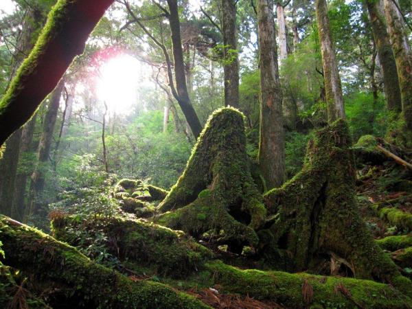 【難易度★★☆☆☆】緑の苔が美しい!白谷雲水峡・森林散策トレッキング