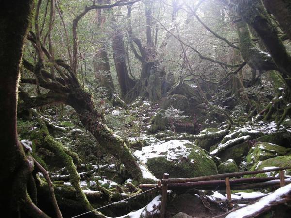 【屋久島・トレッキング】早朝スタート!苔むす森&太鼓岩をめぐる、白谷雲水峡ツアー
