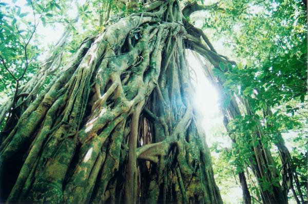 【1日】海岸から山頂まで生い茂る照葉樹林♪西部林道プラン★コーヒー付き