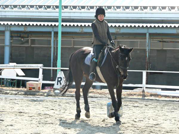 【ワンポイント乗馬体験】基礎の基礎から★馬とのコミュニケーション乗馬