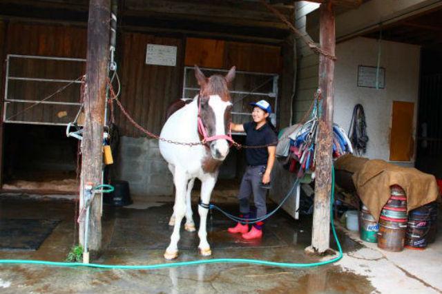 【30分・体験レッスン】馬と触れ合おう★馬場で乗馬体験★コーヒー付き