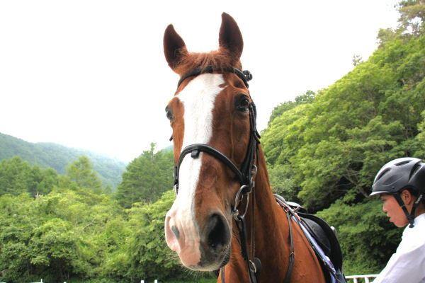 【45分・馬場コース】初心者歓迎★空気がおいしい自然の中、ゆったり乗馬体験!★コーヒー付き