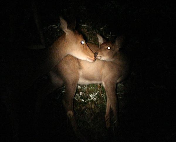 【夜間】夜行性動物に遭遇&満点の星空☆知床ナイトシアター!