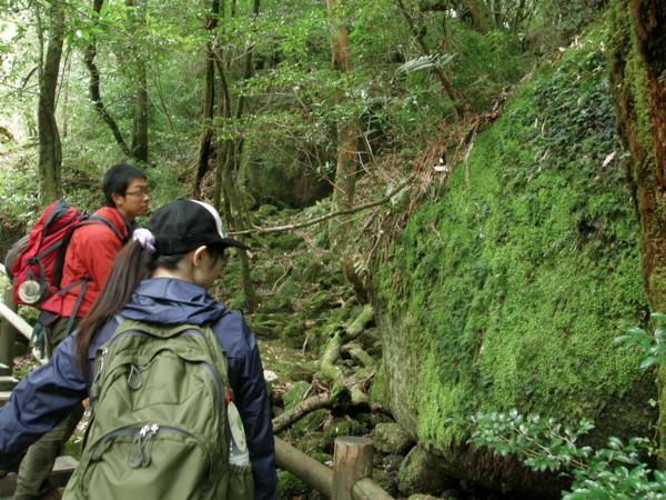 【難易度★☆☆】美しい緑の世界!苔むす森をトレッキング・白谷雲水峡