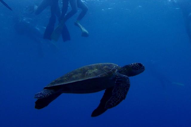 【半日】色あざやかな屋久島の海を覗こう!気軽にシュノーケリング体験
