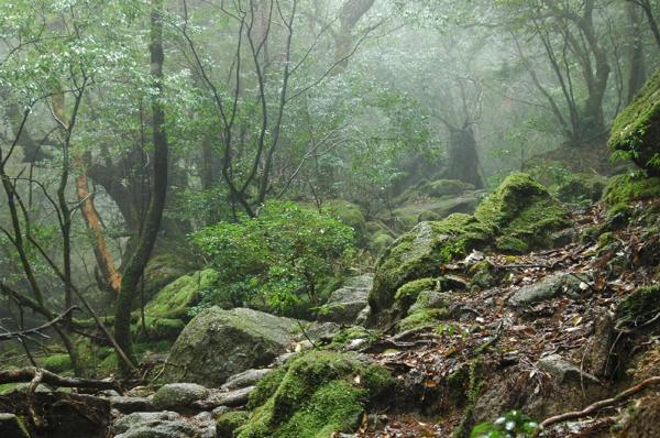 【屋久島・トレッキング】もののけの森まで★白谷雲水峡プラン★ポストカードプレゼント