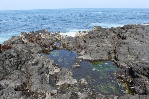 【5〜6時間・エコツアー】伊豆大島♪南部海岸散策&溶岩ウォーク★ステッカープレゼント