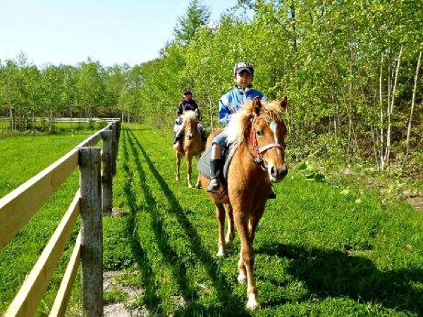 【体験乗馬・30分】基礎レッスン+放牧地の外周をお散歩