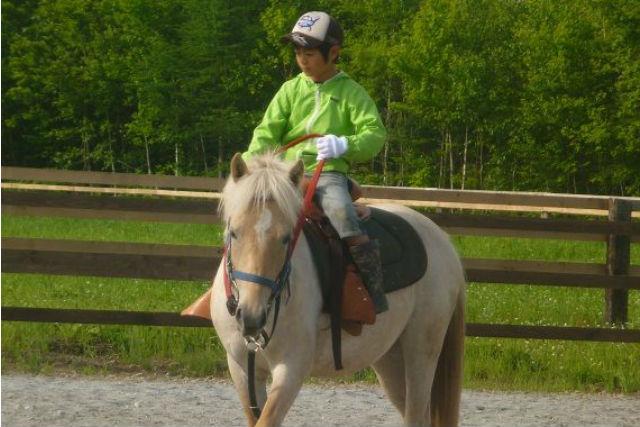 【馬場内レッスン・30分】馬場内で技量に合わせ乗馬★ショートコース