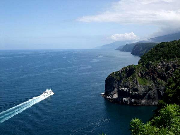【半日・午前or午後】原生林へとご案内♪海を見下ろす断崖の森歩き!