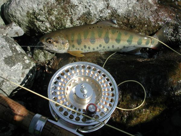 【半日・尻別川】魚種も豊富★ビギナーフライフィッシング