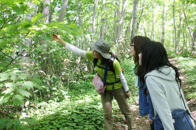 【北海道・ニセコ・半日トレッキング】羊蹄山のふもとに広がる森を探検!半月湖トレッキングプラン