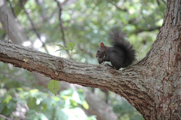 【洞爺湖・エコツアー・半日】無人島、巨木の森を探検!洞爺湖ネイチャーツアー