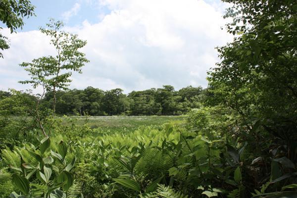 【6時間・奥利根水源の森】「水源の森百選」認定♪ブナの森トレッキング