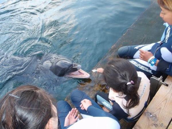 【1日・5時間】あこがれのイルカと一緒に泳ごう!ドルフィンスイムツアー★