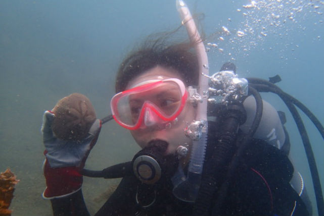 【千葉・ファンダイビング】水質は、最高ランクのAA!沖ノ島・1ビーチ&1ボートプラン