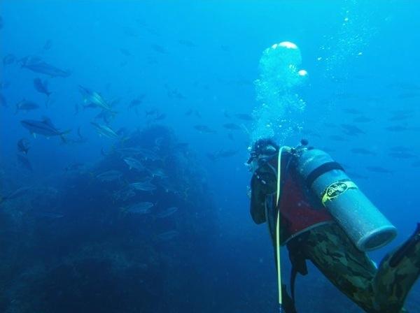 【1日体験ダイビング】ライセンス不要!東北の水中世界を体験しよう!