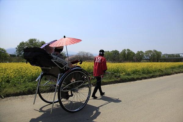 【小布施・人力車】気軽に体験☆小布施の町を人力車で巡るプラン
