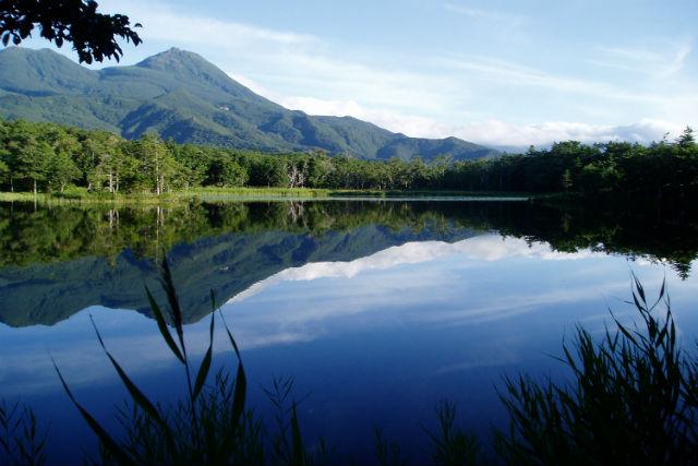 【北海道・知床・エコツアー】知床五湖と海岸原生林をめぐる!1日ゆったり自然探訪