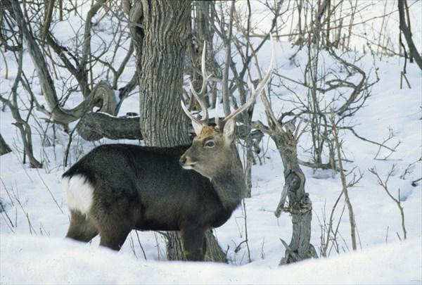 【1時間30分】ガイドと一緒に観察★冬の野生動物ウォッチング