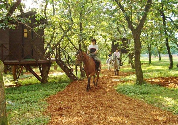 【群馬・乗馬・60分】体の動きで魔法のように馬を操る!基本レッスン+森林散歩