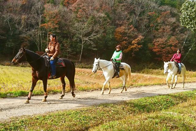 【兵庫・乗馬体験・外乗】初心者でも安心!新緑の自然公園内を馬で散歩(1~4名)