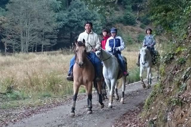 【兵庫・乗馬体験】白馬で行く森林浴外乗!初めての方も安心(1~4名、白馬保証1名)