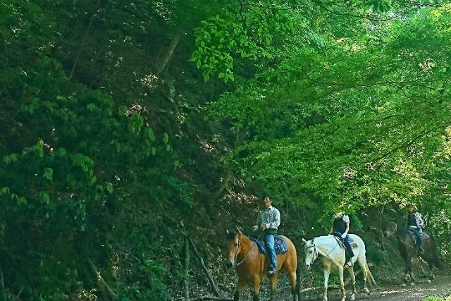 【兵庫・乗馬体験】初心者でも大丈夫!乗馬レッスン+森林浴外乗(90分)