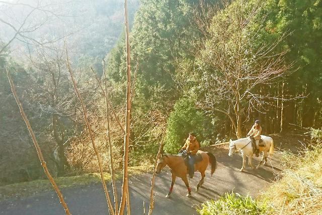 【兵庫・乗馬体験・ホーストレッキング】初心者でも大丈夫!乗馬レッスン+山に登る森林浴外乗(90分)