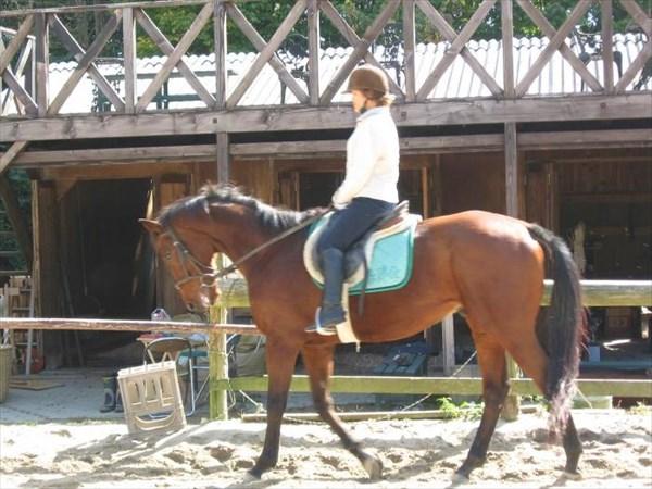 【騎乗15~20分】初めての方歓迎!体験乗馬