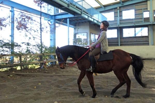 【馬場内乗馬・30分】屋内練習場で快適!初めての方も楽しめます
