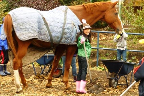 【牧場体験】夏休みの自由研究に!岩手の牧場で馬とふれあおう。