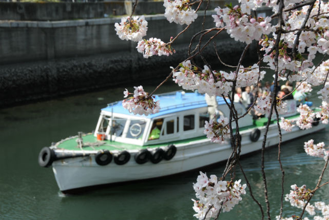 【横浜・お花見クルーズ】春爛漫!満開の桜を楽しむ大岡川お花見クルーズ