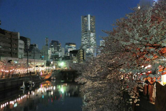 【横浜・夜桜クルーズ】夜空の下で、ほのかに輝く桜を満喫。大岡川夜桜クルーズプラン