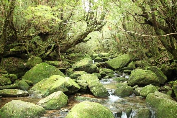 【半日】苔むす森を歩こう。白谷雲水峡プラン