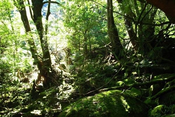 【完全貸切プライベートツアー!】白谷雲水峡で、のんびり珈琲タイム